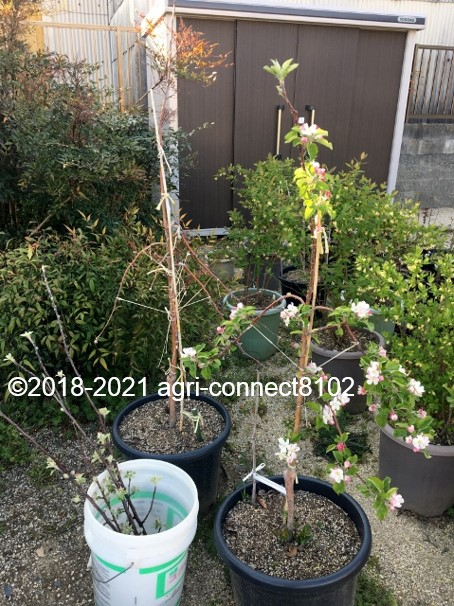 f:id:agri-connect:20210411214837j:plain