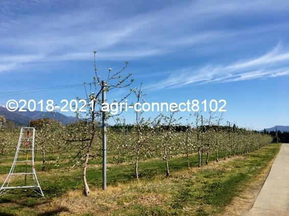 f:id:agri-connect:20210422225946j:plain