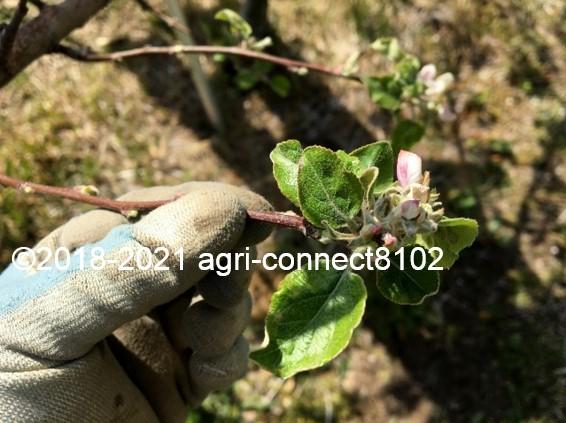 f:id:agri-connect:20210422230246j:plain