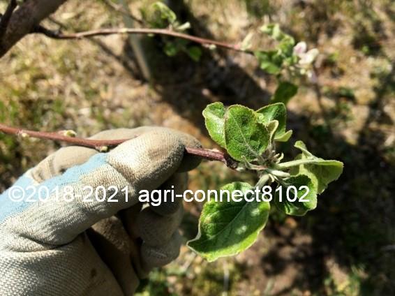 f:id:agri-connect:20210422230248j:plain