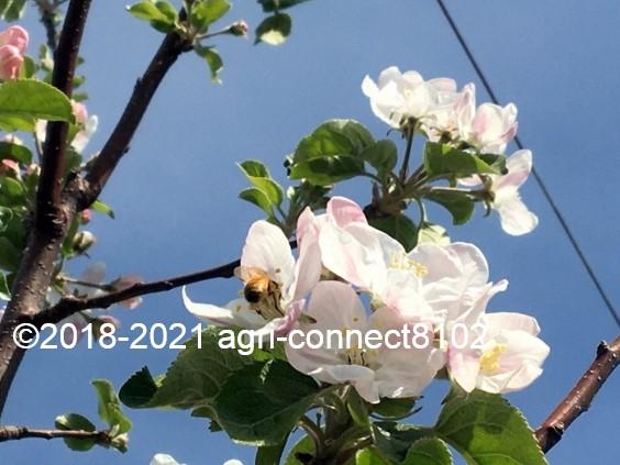 f:id:agri-connect:20210422230856j:plain