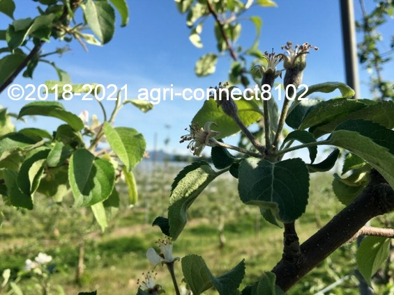 f:id:agri-connect:20210508221420j:plain