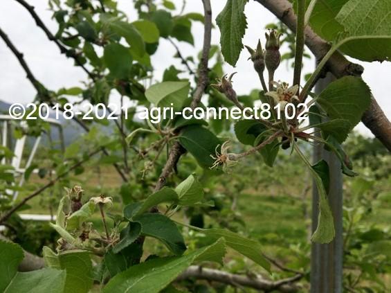 f:id:agri-connect:20210508222133j:plain