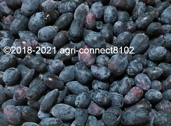 f:id:agri-connect:20210521165810j:plain
