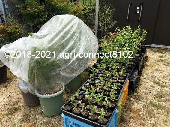 f:id:agri-connect:20210521170208j:plain