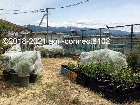 f:id:agri-connect:20210521170211j:plain