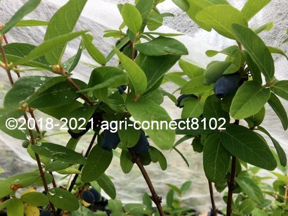 f:id:agri-connect:20210521170714j:plain