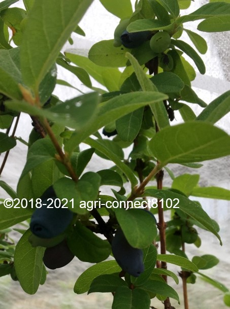 f:id:agri-connect:20210521170720j:plain