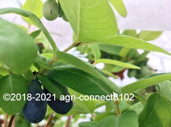 f:id:agri-connect:20210524234756j:plain