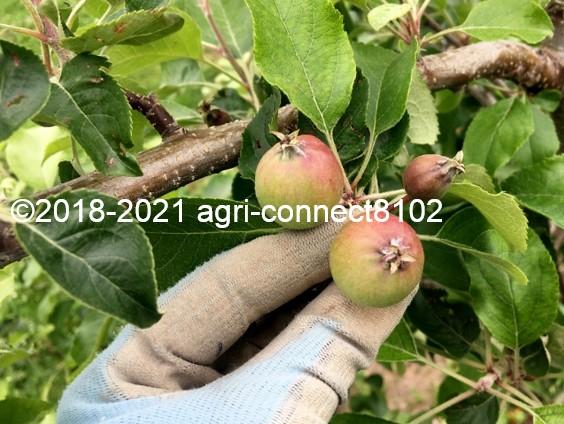 f:id:agri-connect:20210528230820j:plain