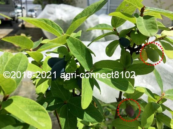 f:id:agri-connect:20210529222651j:plain