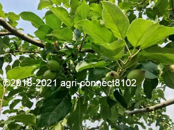 f:id:agri-connect:20210604161755j:plain