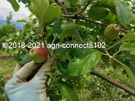 f:id:agri-connect:20210604162305j:plain