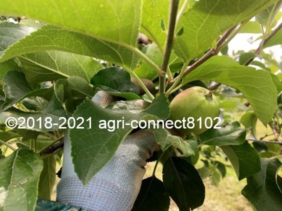 f:id:agri-connect:20210604162310j:plain