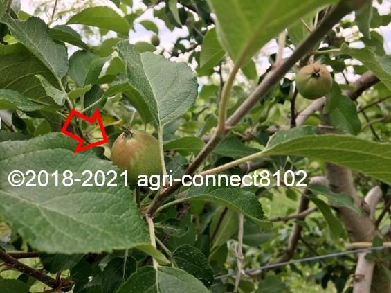 f:id:agri-connect:20210616214418j:plain