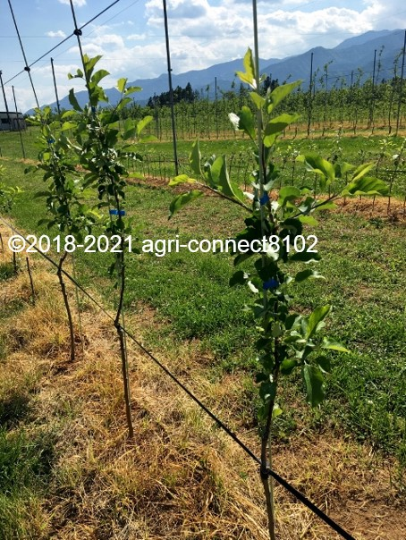 f:id:agri-connect:20210616221021j:plain