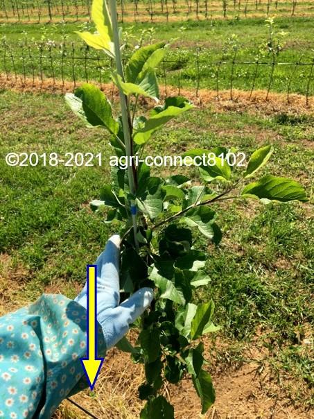 f:id:agri-connect:20210616221252j:plain