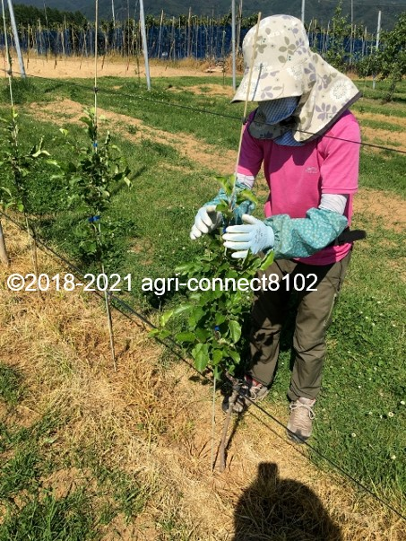 f:id:agri-connect:20210616222144j:plain