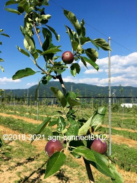 f:id:agri-connect:20210616222540j:plain