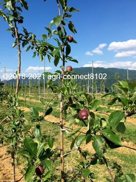 f:id:agri-connect:20210616222548j:plain