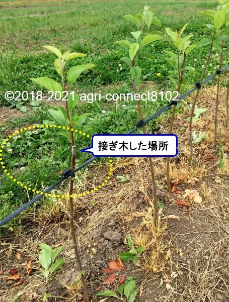 f:id:agri-connect:20210617204932j:plain