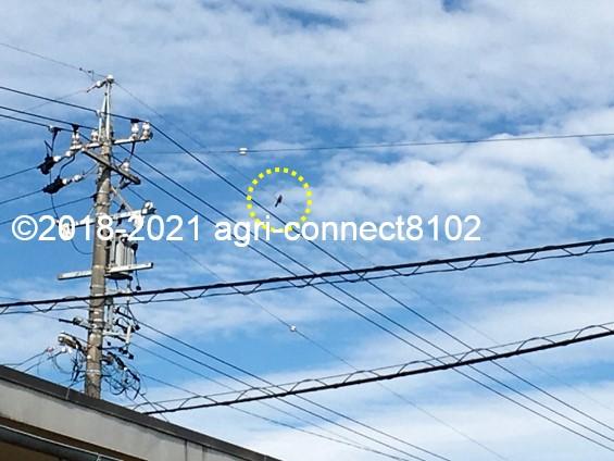 f:id:agri-connect:20210621214427j:plain