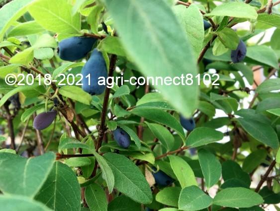 f:id:agri-connect:20210621214652j:plain
