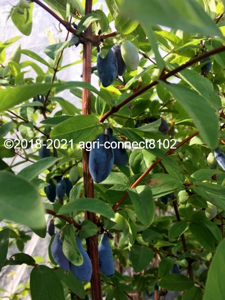f:id:agri-connect:20210621214657j:plain
