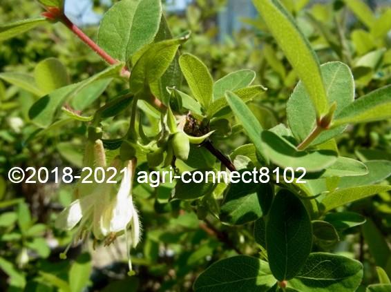 f:id:agri-connect:20210629211411j:plain