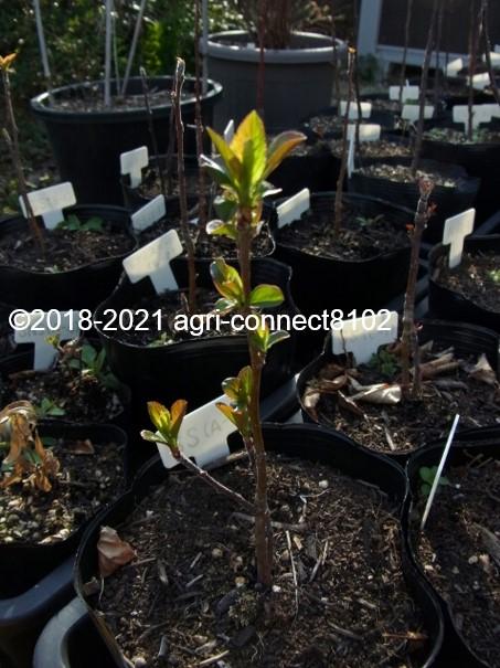f:id:agri-connect:20210704151548j:plain