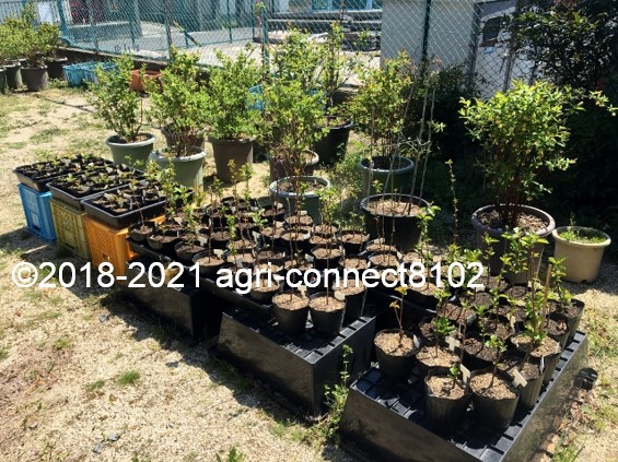 f:id:agri-connect:20210704151913j:plain