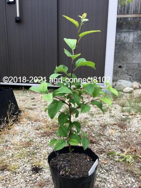 f:id:agri-connect:20210704152142j:plain