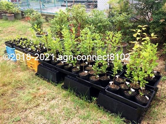 f:id:agri-connect:20210704152501j:plain