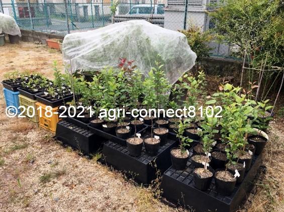 f:id:agri-connect:20210704160821j:plain