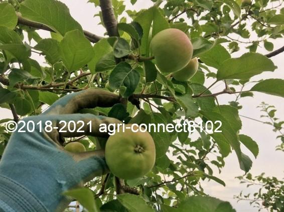 f:id:agri-connect:20210708104323j:plain