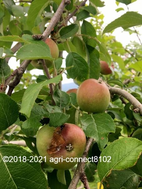 f:id:agri-connect:20210708104426j:plain