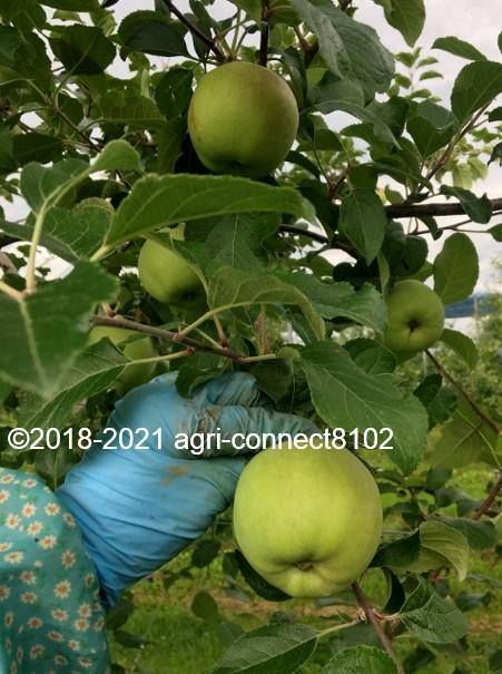 f:id:agri-connect:20210708104814j:plain
