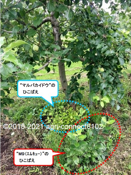 f:id:agri-connect:20210708113836j:plain