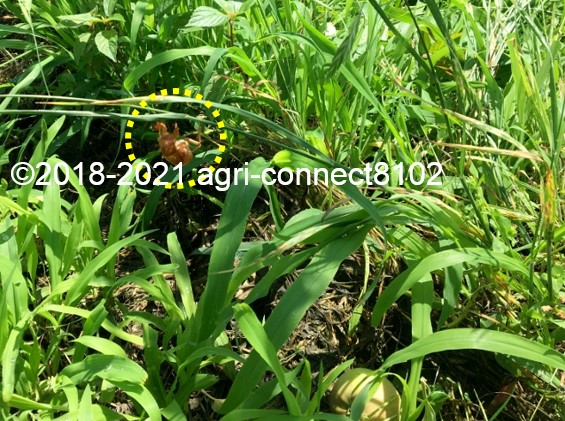 f:id:agri-connect:20210711214049j:plain