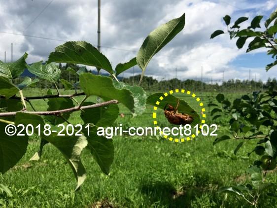 f:id:agri-connect:20210711214053j:plain