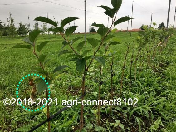 f:id:agri-connect:20210711214231j:plain