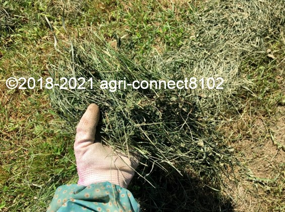 f:id:agri-connect:20210722165441j:plain
