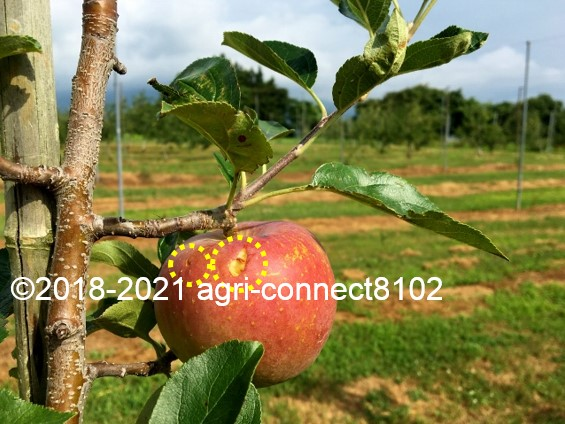 f:id:agri-connect:20210729230635j:plain