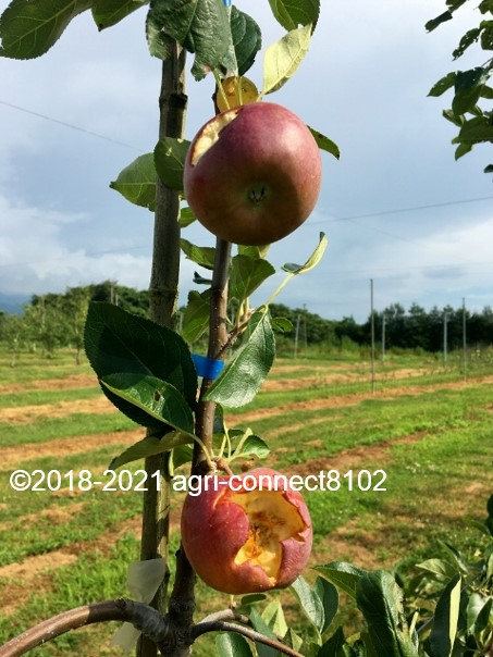 f:id:agri-connect:20210729230640j:plain