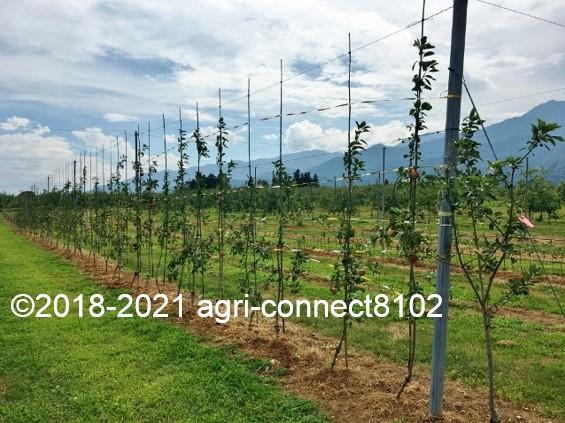 f:id:agri-connect:20210729231105j:plain