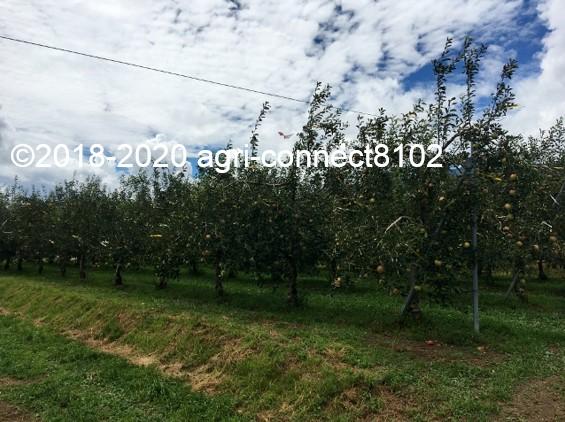 f:id:agri-connect:20210729233043j:plain