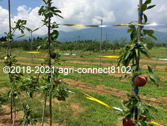f:id:agri-connect:20210730211801j:plain