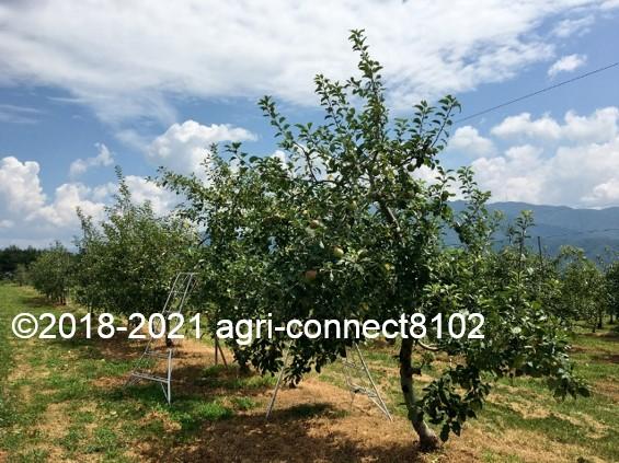 f:id:agri-connect:20210730211926j:plain