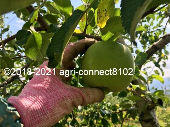 f:id:agri-connect:20210730212011j:plain