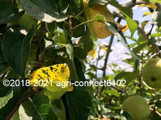 f:id:agri-connect:20210730212142j:plain